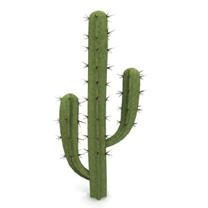 cactus.jpgc040583b-011b-41e4-b531-4db5ce5dfd74Larger